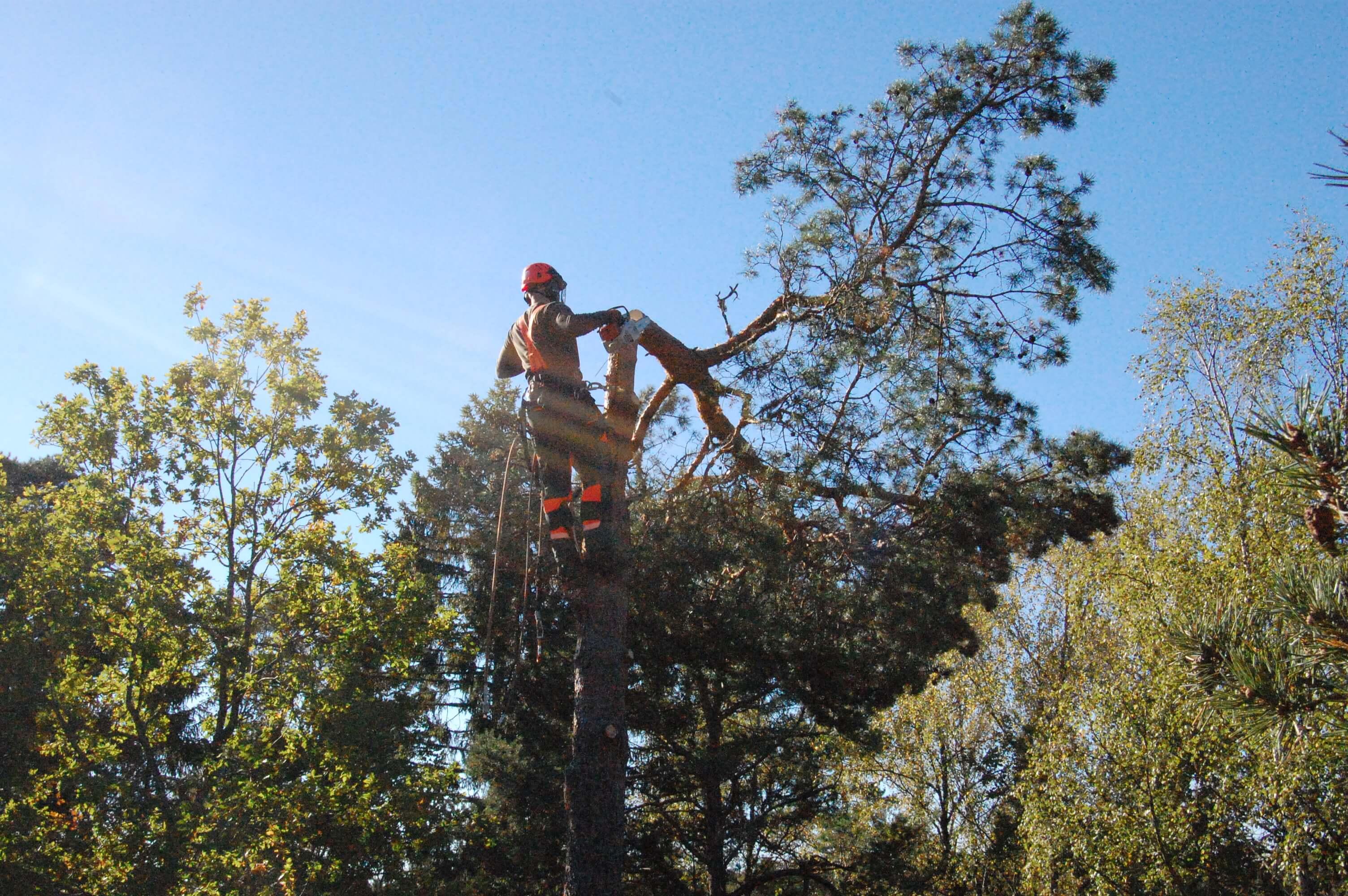 Trädfällare i Stockholm