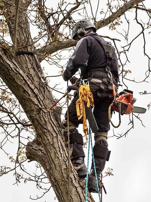 Arborist till Wasa trädfällning