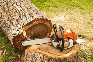 Trädfällning såg