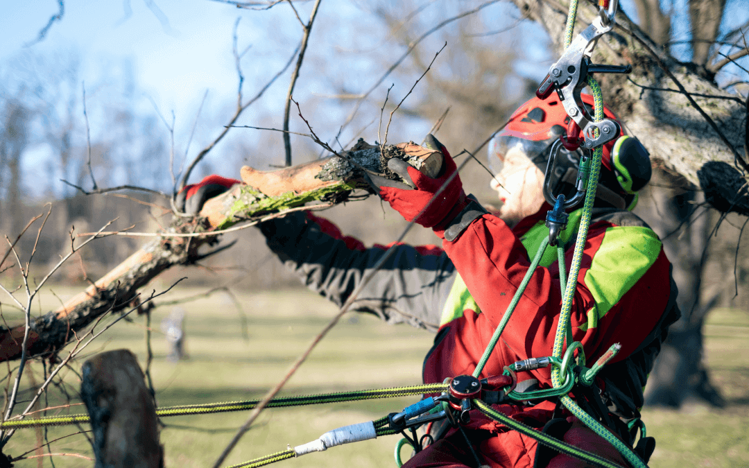 När det är dags att beskära träden?