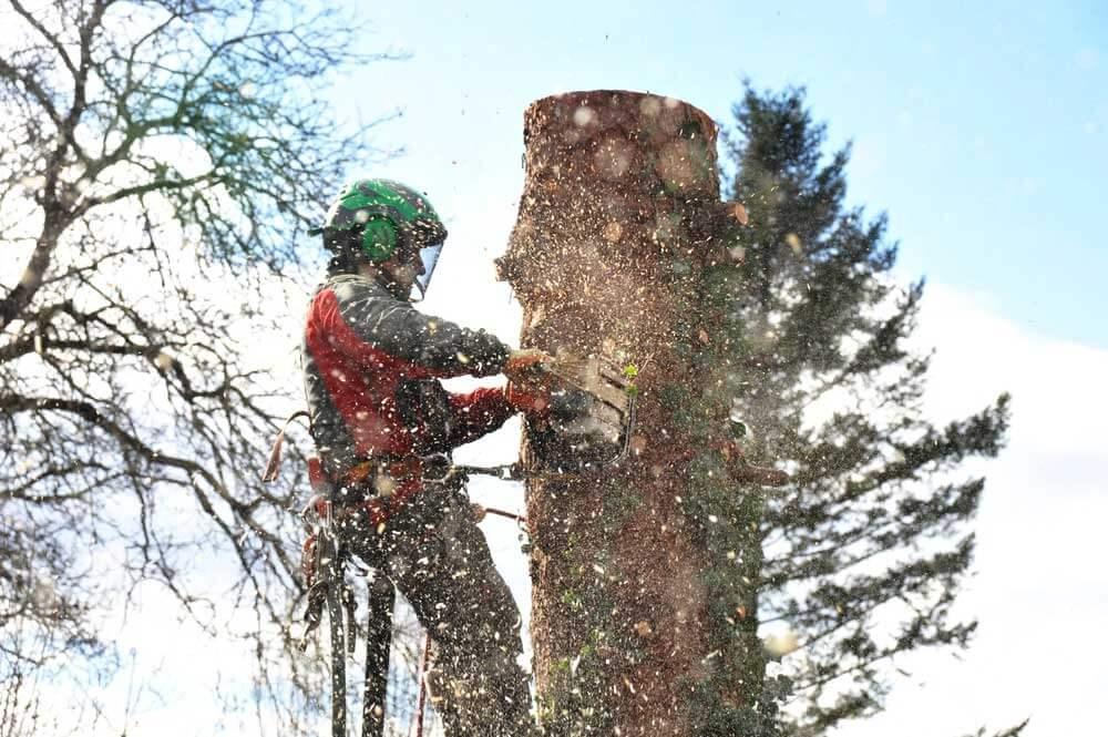 När-det-är-dags-att-beskära-träden