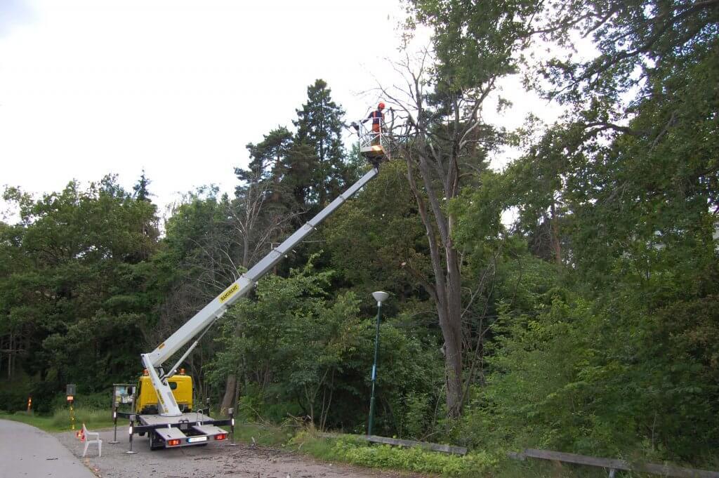 Wasa Trädfällning beskära träden