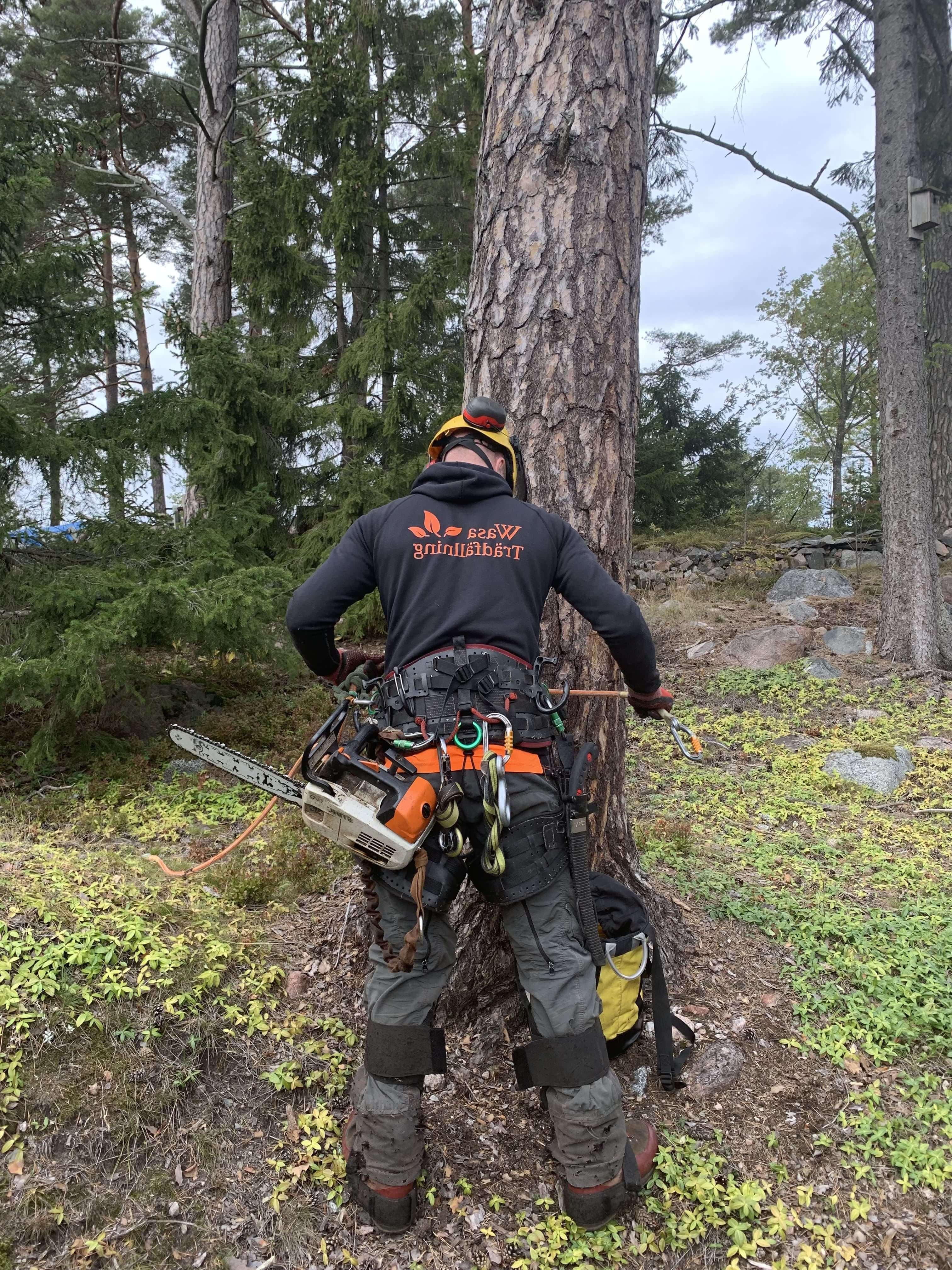 Trädfällning i Järfälla