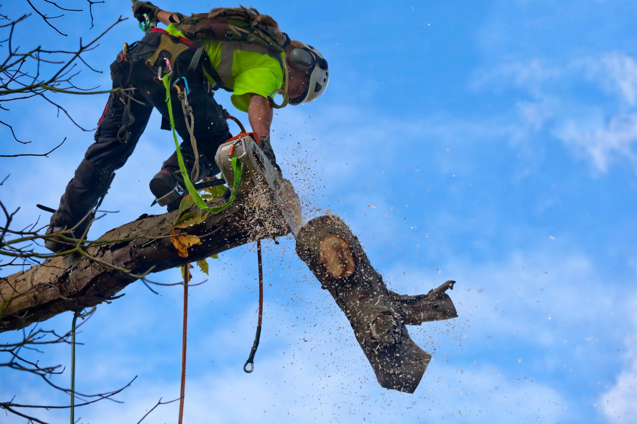 Wasa Trädfällning Arborist