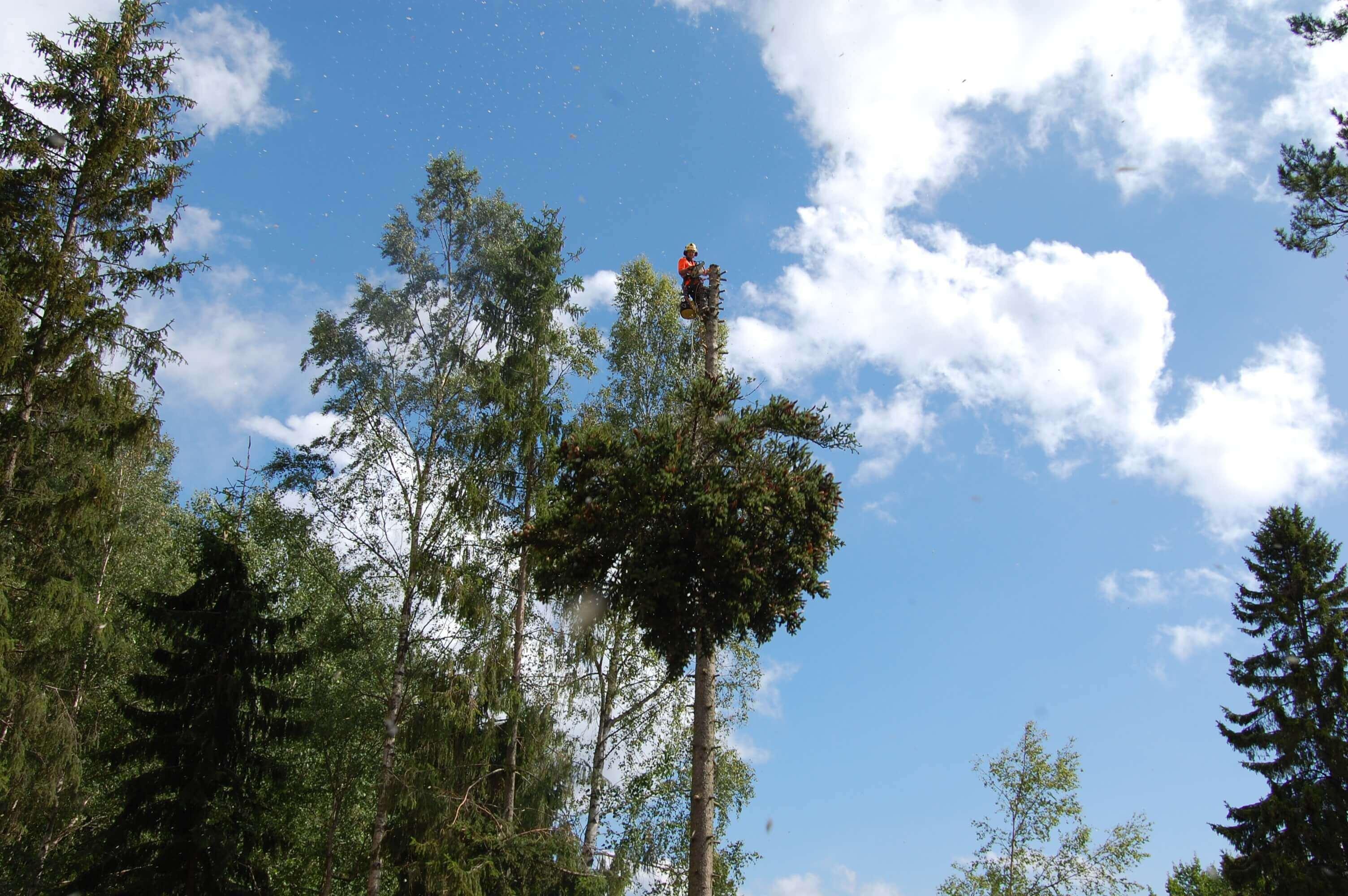Trädfällning i Ekerö