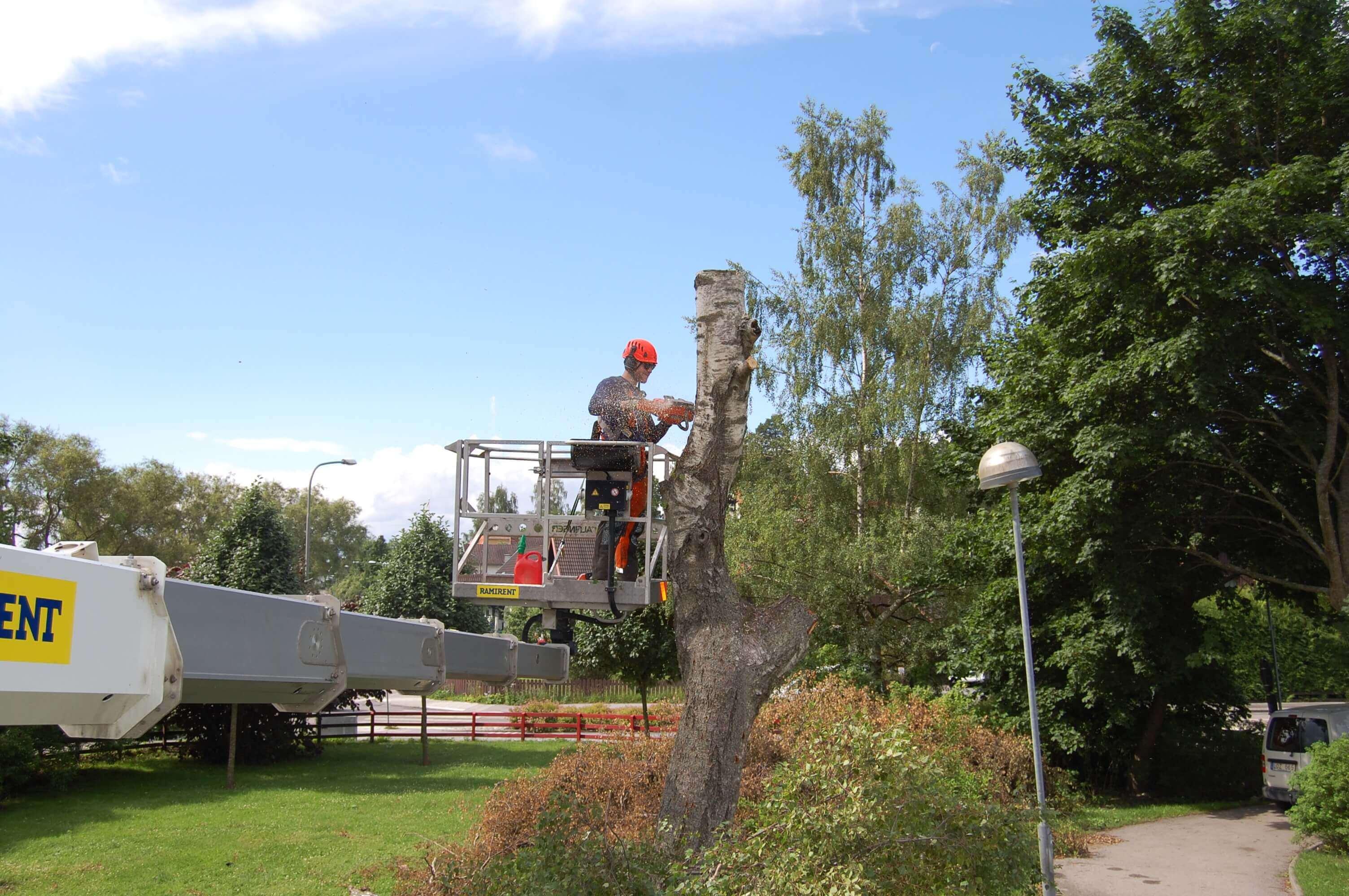 Trädfällning i Stockholm