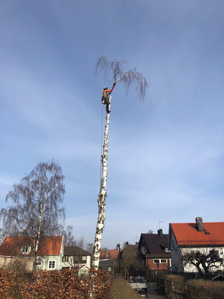 https://www.wasatradfallning.se/wp-content/uploads/2019/07/Trädfällning-Haninge-768x1024.jpg