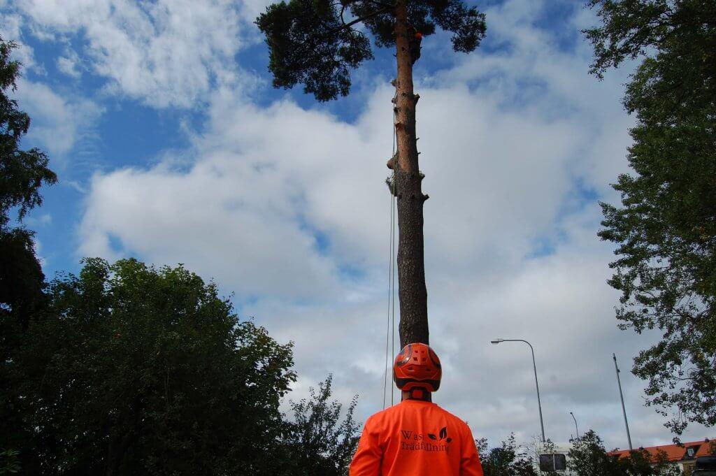 Wasa Trädfällning i Nacka