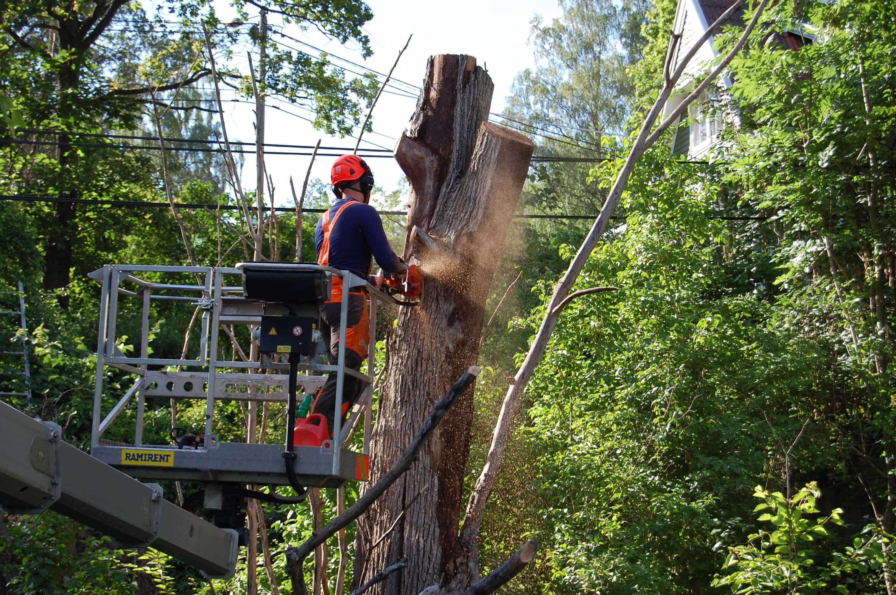 Arborist Wasa Trädfällning