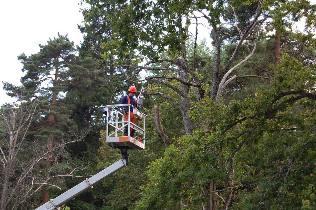 Trädfällare från Wasa Trädfällning