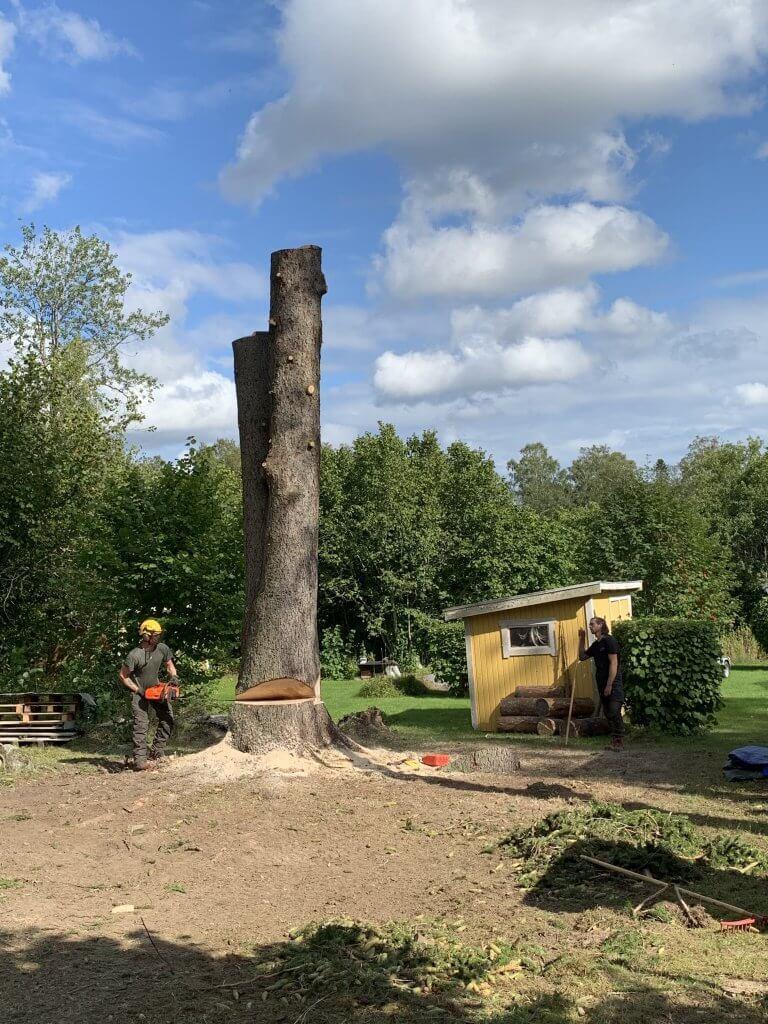 Fullständiga trädfällningar