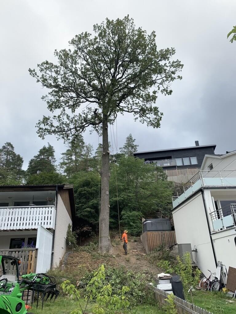 Nacka Trädfällning