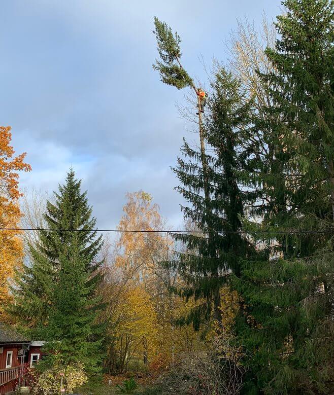 Trädfällning Sollentuna