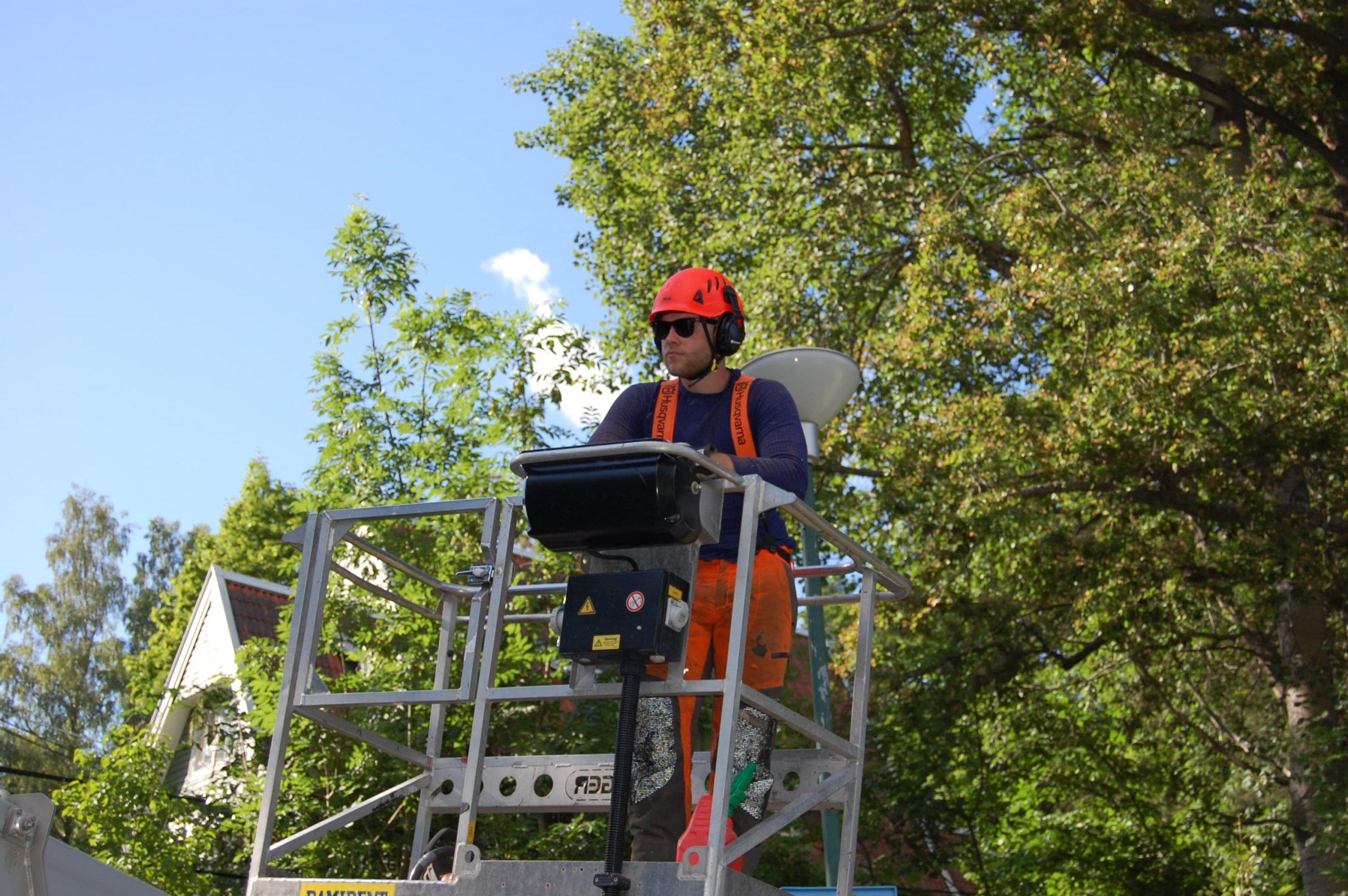 Trädfällning i Vaxholm