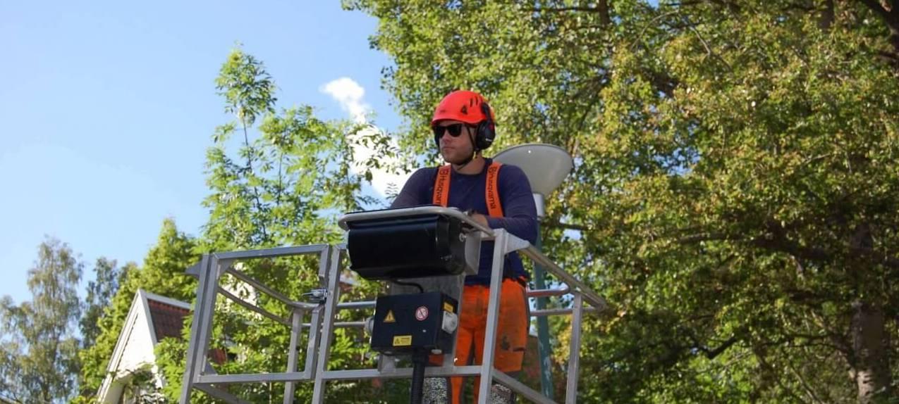 Vår arborist fäller träd från lyftkran