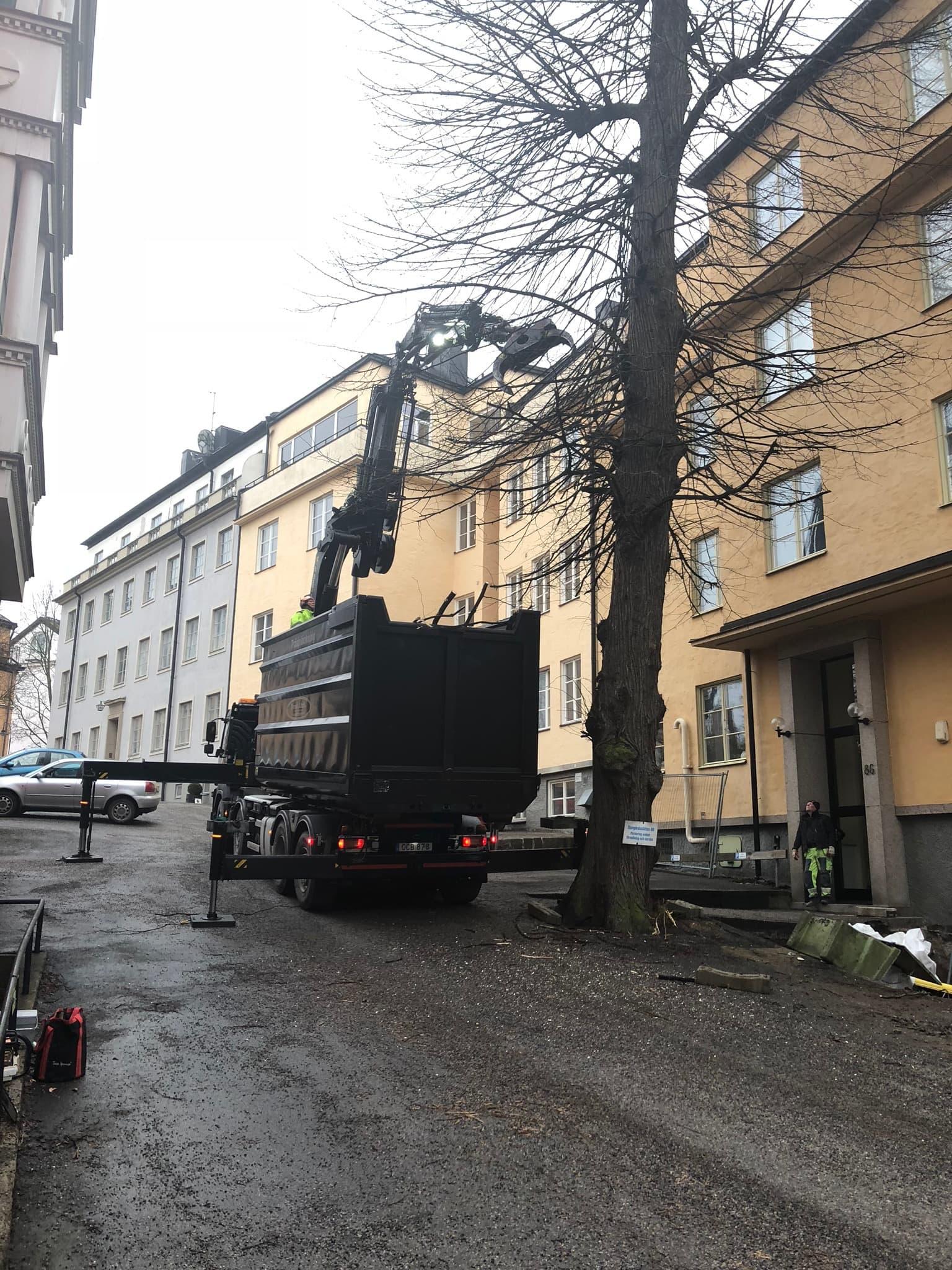 Trädfällning i Stockholm Innerstad