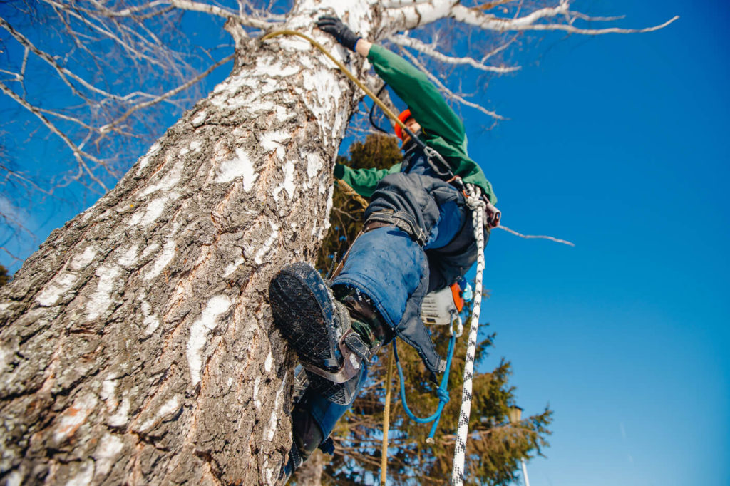 Trädfällning i Södertälje