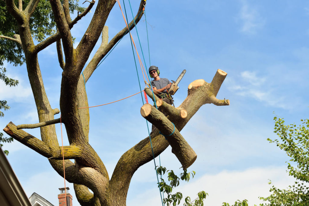 Trädfällning i Tullinge