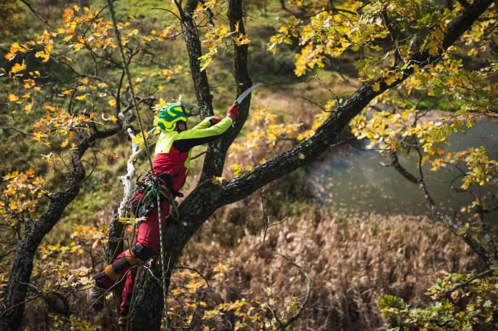 Trädfällning i Hässelby