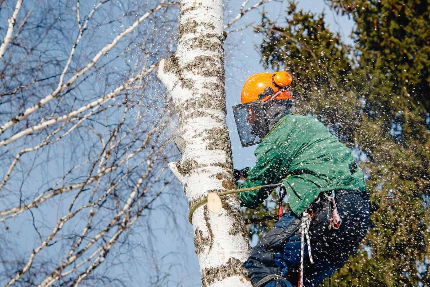 Trädfällning i Mälarhöjden